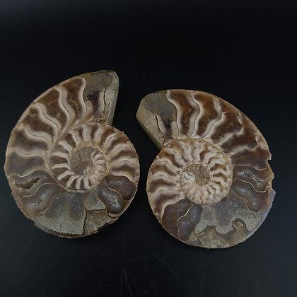 Cleoniceras