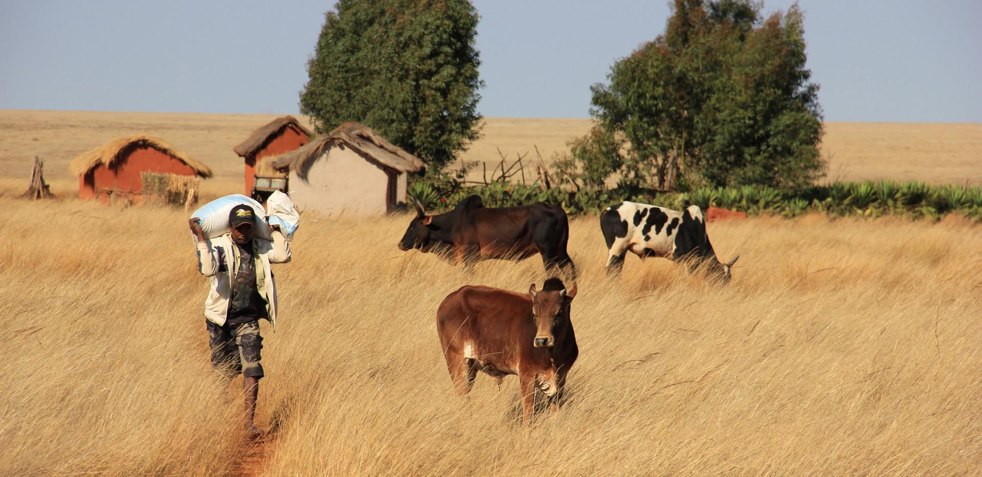 Paysage sud villageois