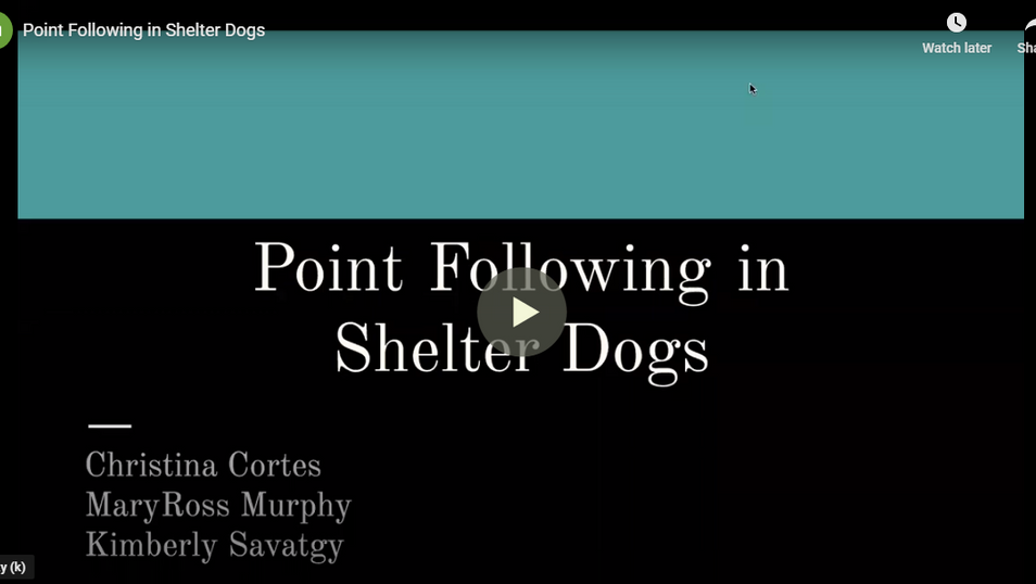 Point Following in Shelter Dogs