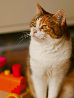 Katze 3f