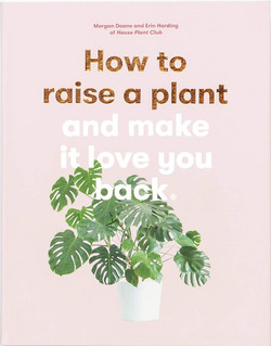 How to Rasie a Houseplant