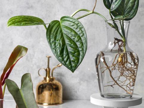 Community + Plants