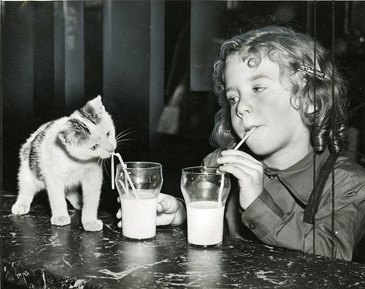 Debunking the Myth: Cats and Cow's Milk