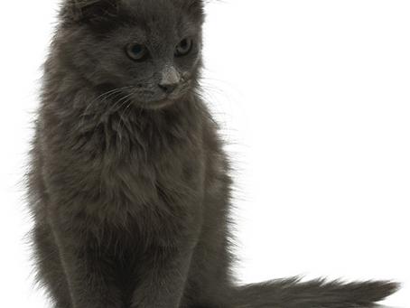 Q&A: Senior Cats and Litter Box Needs