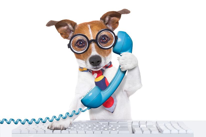 Online/Skype Consult