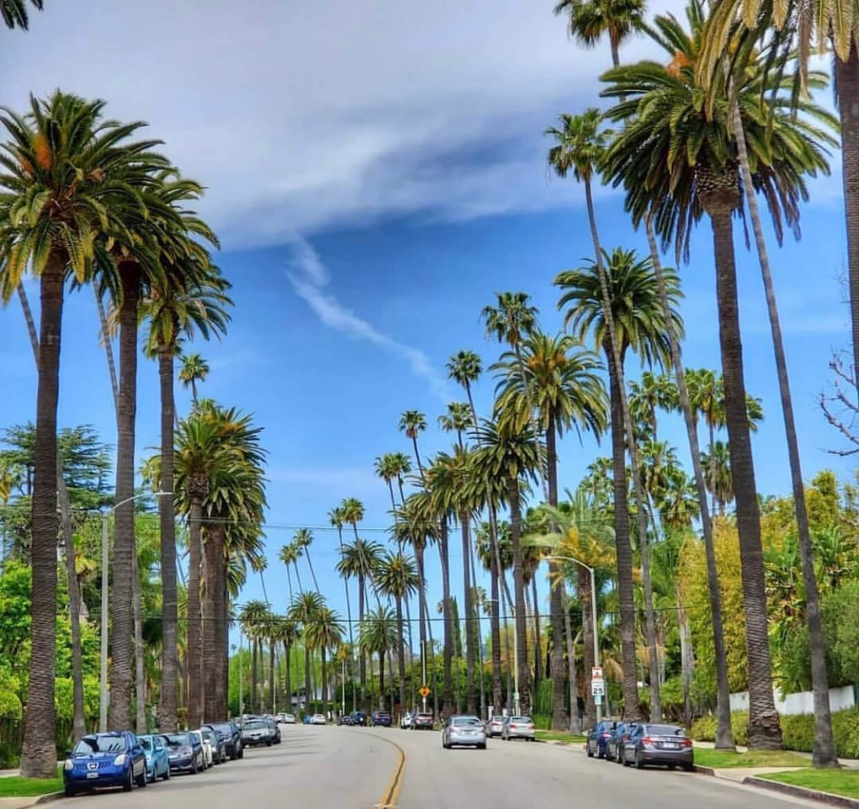 Palm Tree Street of Beverly Hills
