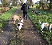 York Dog Walker