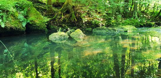 Das Waldgebiet »Krude« und Joeleens neue Heimat