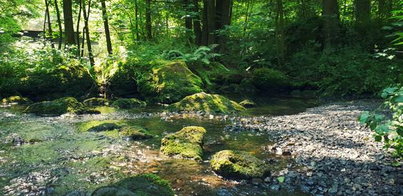 Der Fluss »Fluin«, welcher sich durch ganz Talera erstreckt