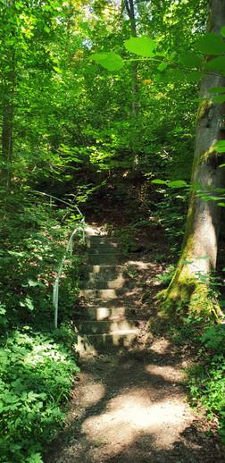Die steinigen Treppen, rein in das Waldgebiet »Krude«