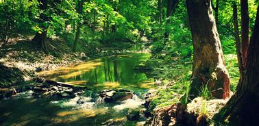 Dieses Bild zeigt den Bach, der durch Sinna fließt.