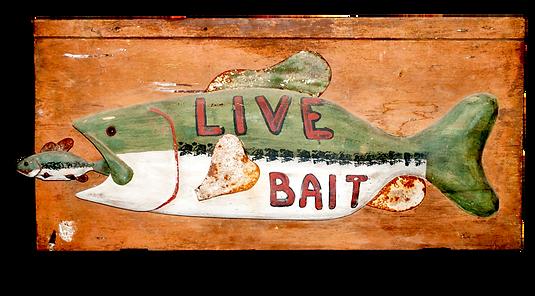 live bait shop big bass fishing