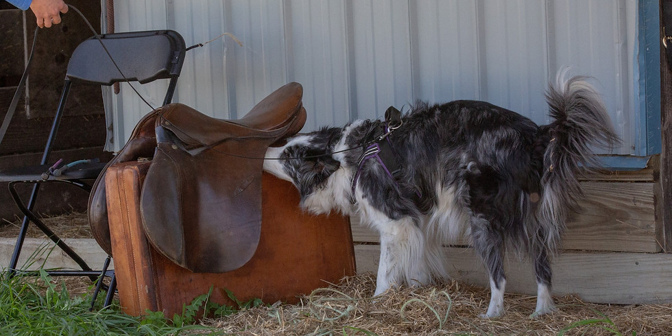 Staying on Source and Leash Handling Workshop