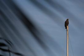 bird_fb.jpg