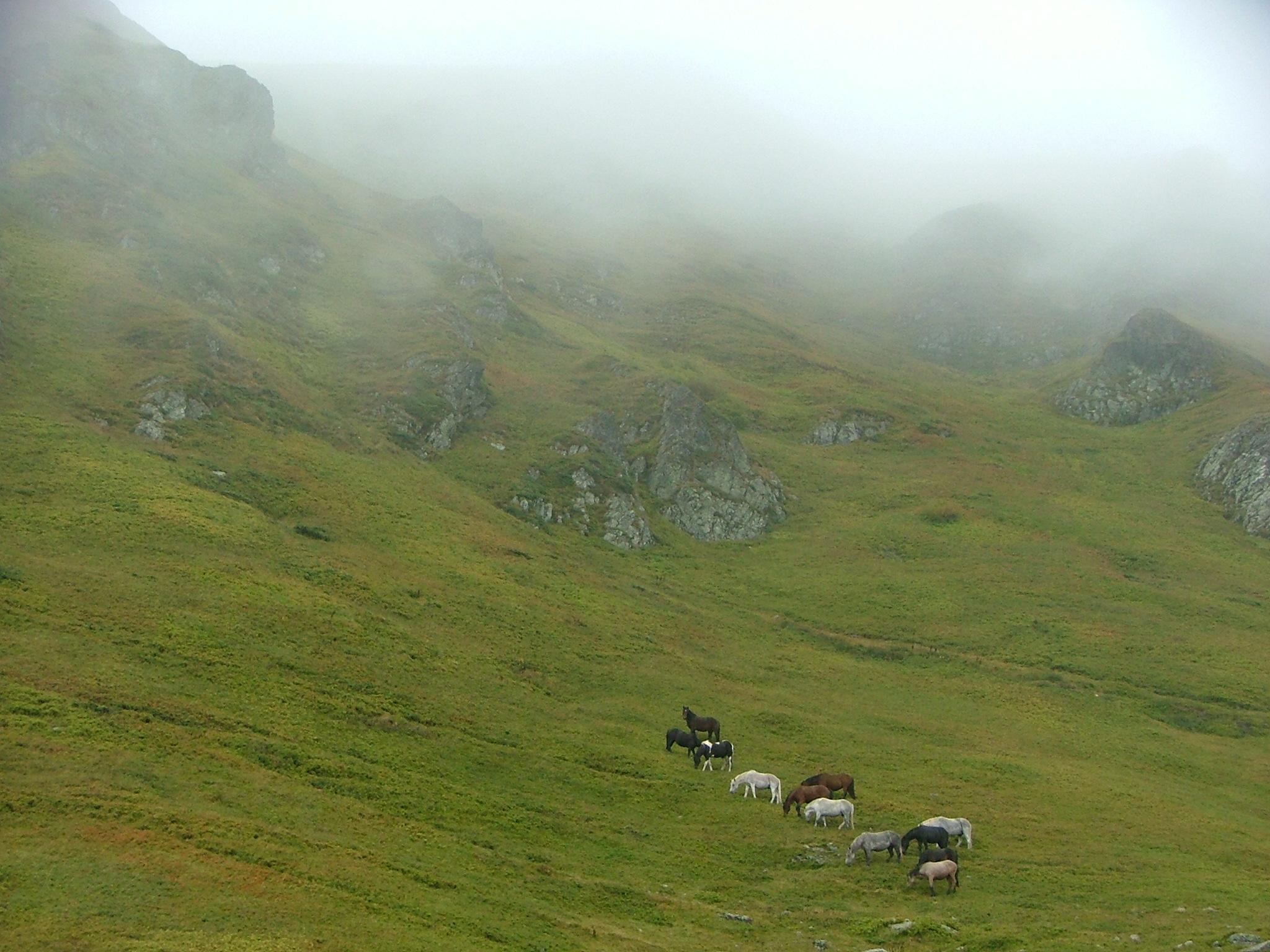 סוסים בשמורת הדורמיטור, מונטנגרו