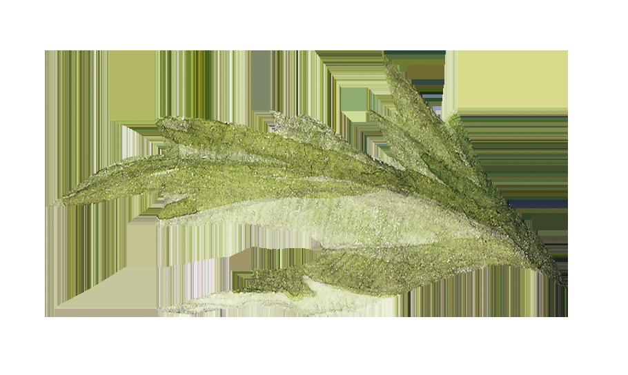 illustration of a leaf