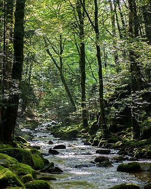 forest-820801_960_720.jpg