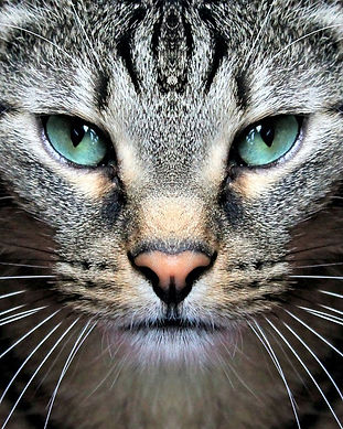 cat-3531238_960_720.jpg