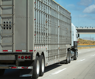 cattle-stock-truck.png
