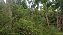tree-planting-results-treelands-hamilton