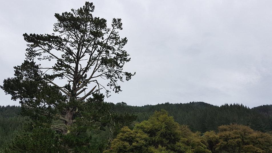 tree-habitat-inspections-treelands