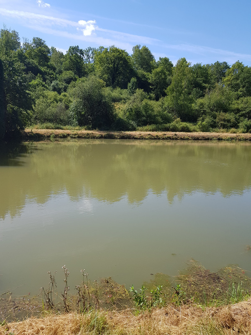Les étangs de Brouennes