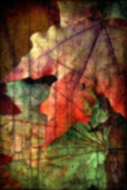 leavescolorsml.jpg