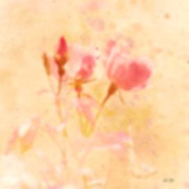 pinkinsquare2.jpg