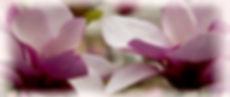 magnoliaspringsml.jpg