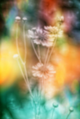 wildflowermultisml.jpg
