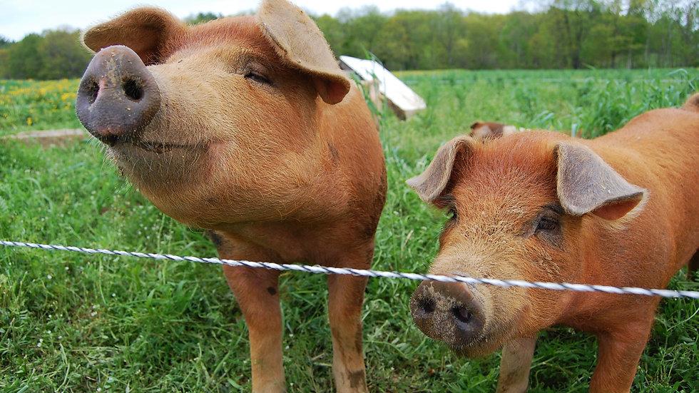 Pork - Whole - Deposit