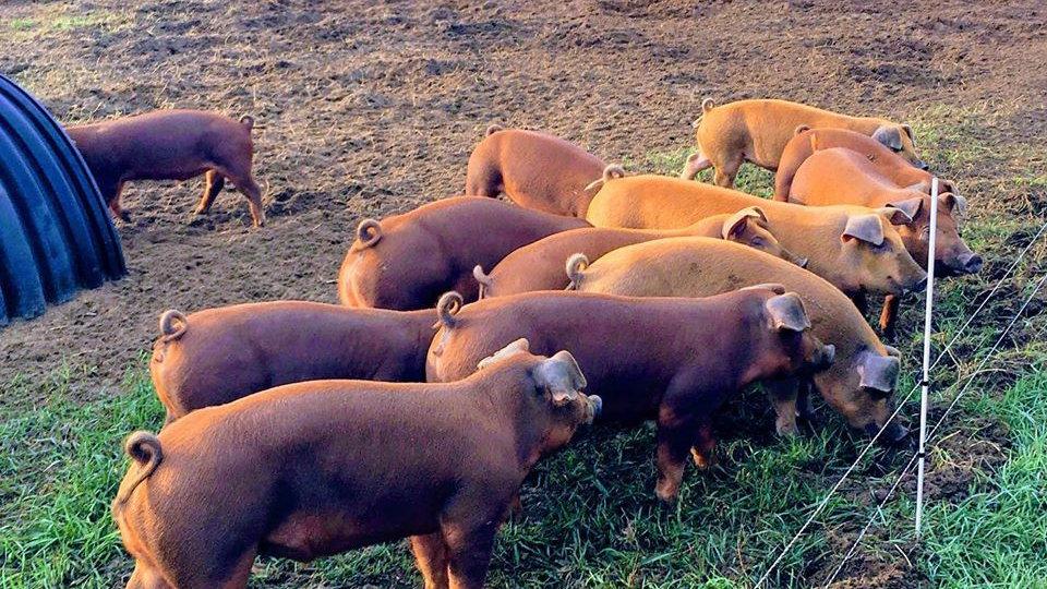 Pork - Side - Deposit
