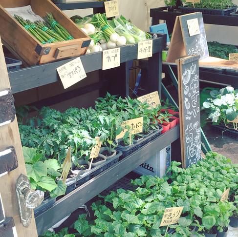 この季節、何を食べる? 産直野菜・旬の野菜を 選ぶメリット
