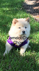Mya puppy.jpg