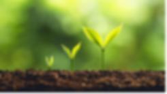 Pflanzen%2520zu%2520Beginn_edited_edited.png