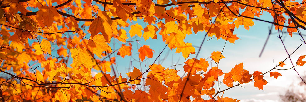 Close up of tree branches with orange leaves on a clear day
