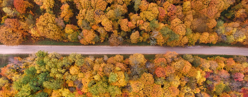 Aerial view of a country road surrounded by trees with yellow and orange leaves