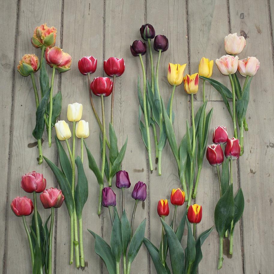 tulips - 2020 varieties
