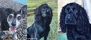 Pet portraits (3).png