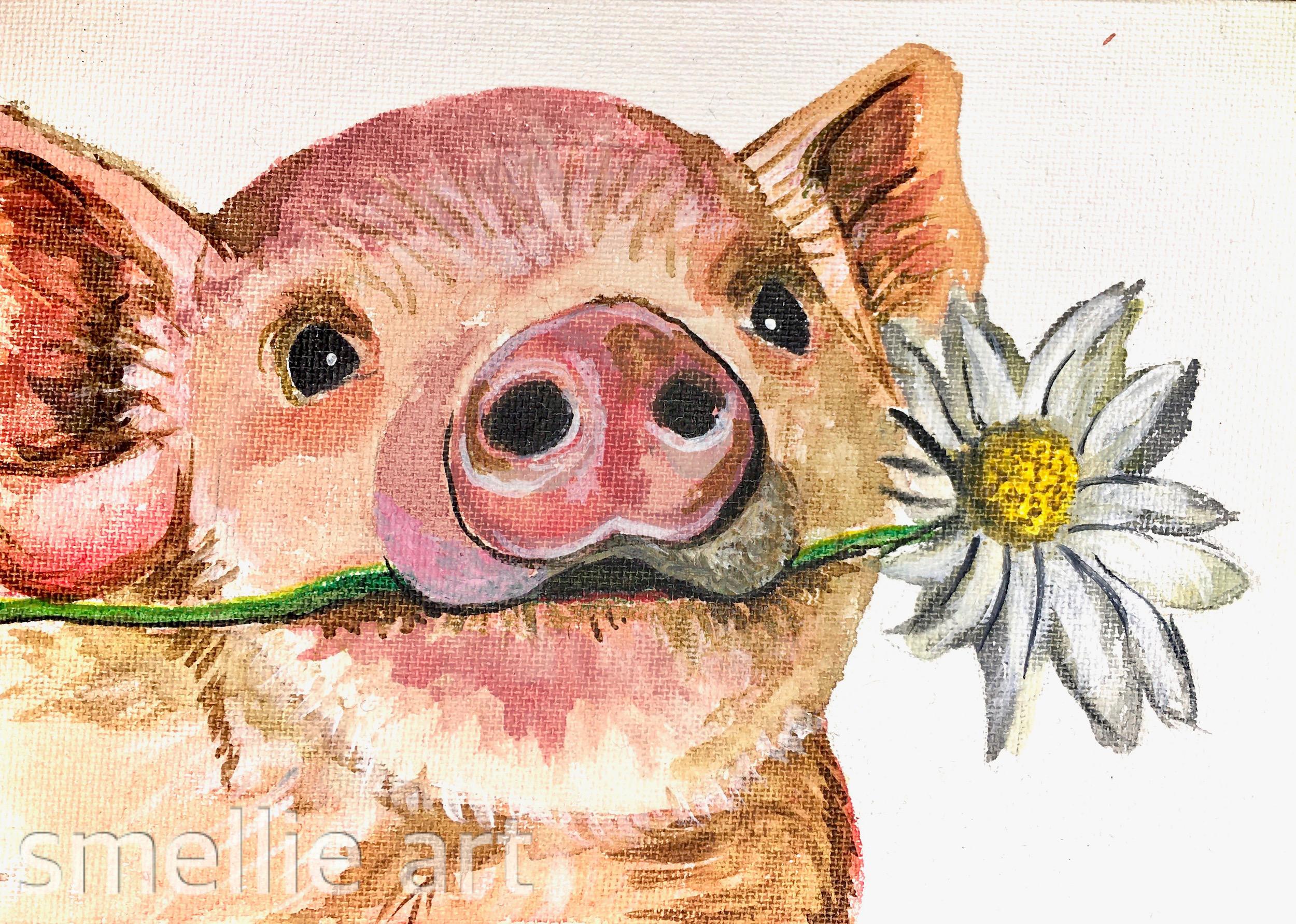 Pig Splash.JPG