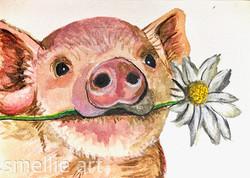 Pig Splash