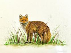 Fox splash