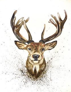 Buck Splash