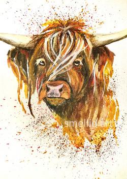 Cow Splash