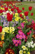 flower garden.png