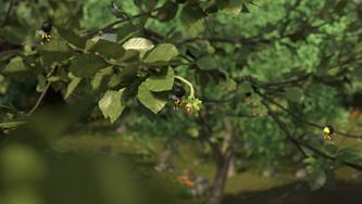 Bee 13.jpg