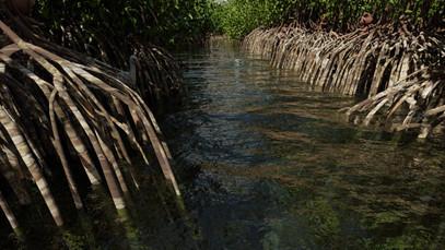 Mangrove Forest 10.jpg