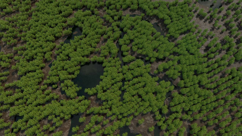 Mangrove Forests 16.jpg