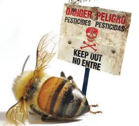 pesticides%20bees_edited.jpg