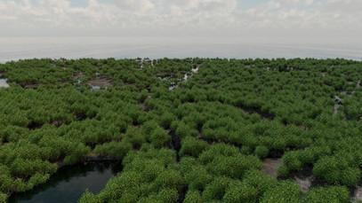 Mangrove Forests 19.jpg